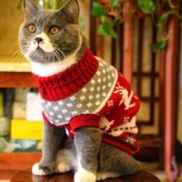 Słodki kociak sweter kostium zimowe ciepłe ubrania dla zwierząt ubrania dla kotów dla kotów Katten Kedi Giyim Mascotas Gato zwie
