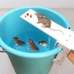 Diy do przydomowego ogrodu kontroler szkodników pułapka na szczury Quick Kill Seesaw Mouse Catcher Bait Home pułapka na szczury