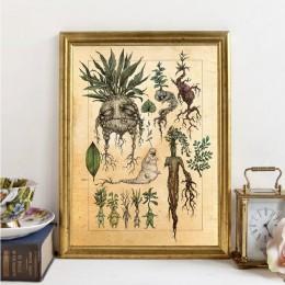 Harry Fan Art Illustration śliczne Mandrake dekoracja roślinna obraz na płótnie obraz na ścianie, klasyczny film plakat wystrój